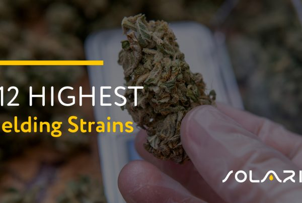 Highest Yielding Strains