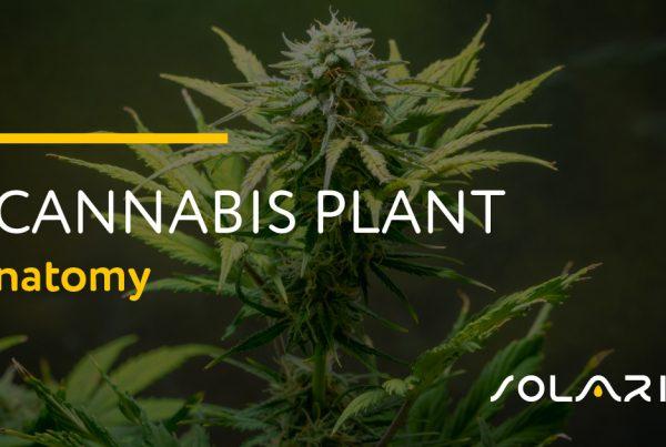 Cannabis Plant Anatomy