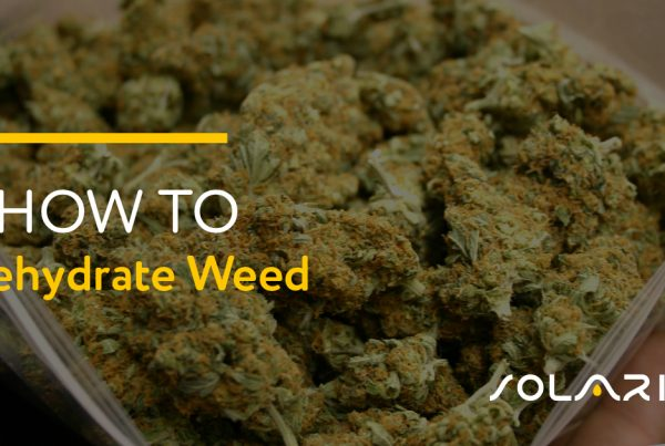 How to Rehydrate Weed