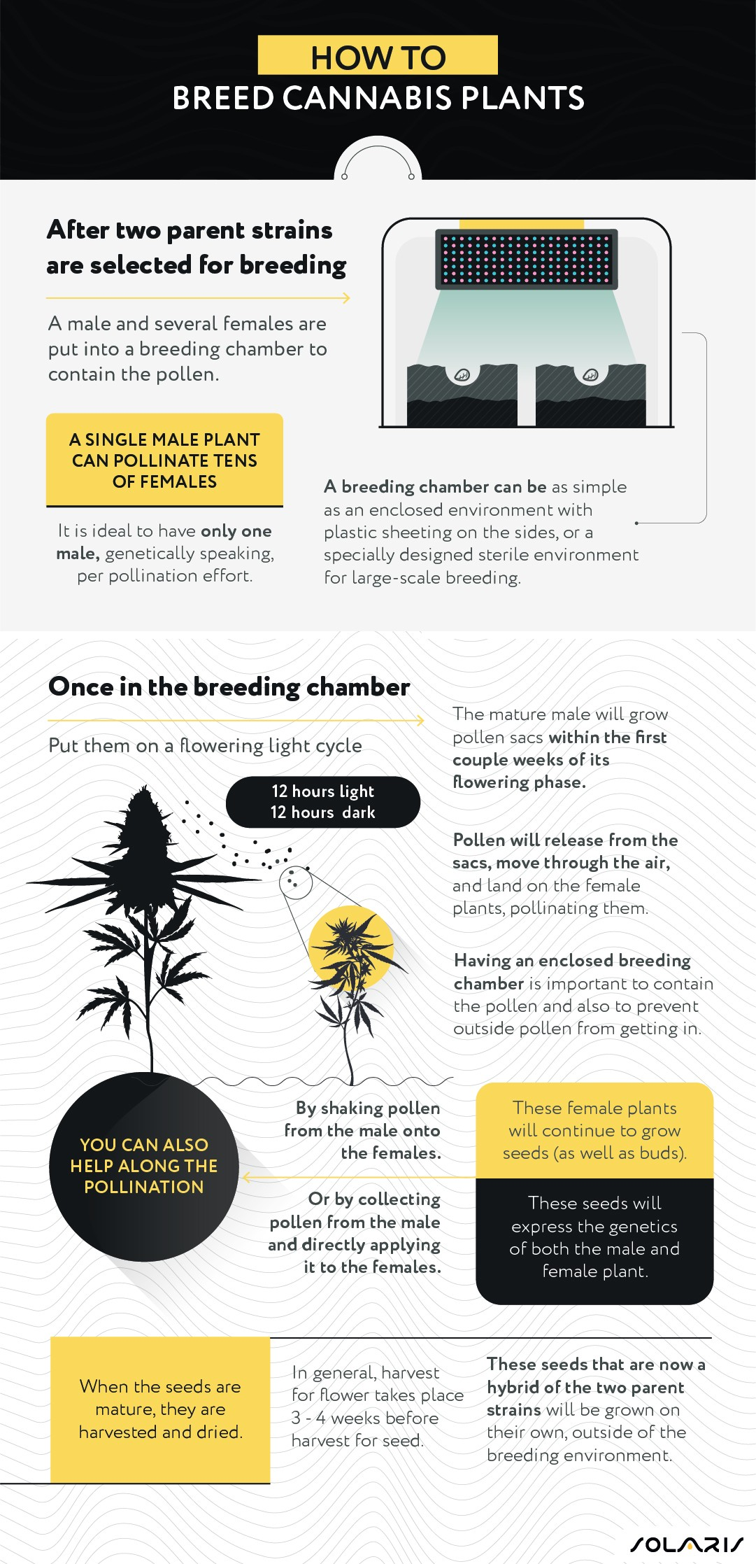How to breed cannabis plants