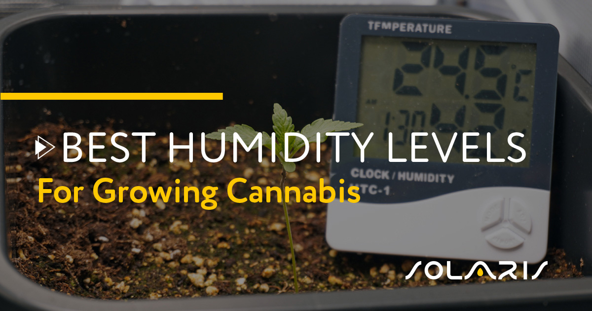 Best Humidity Levels for Growing Cannabis