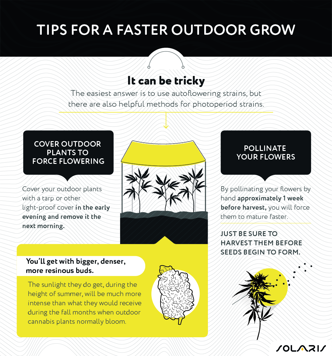 Tips for a faster outdoor grow