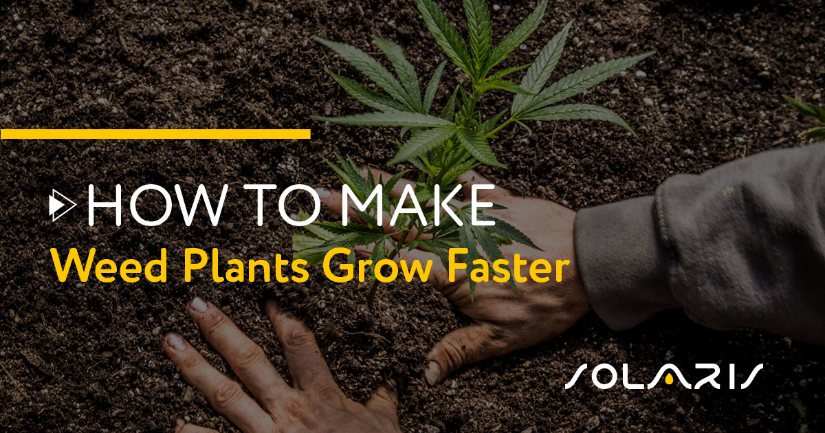 How to Make Weed Plants Grow Faster
