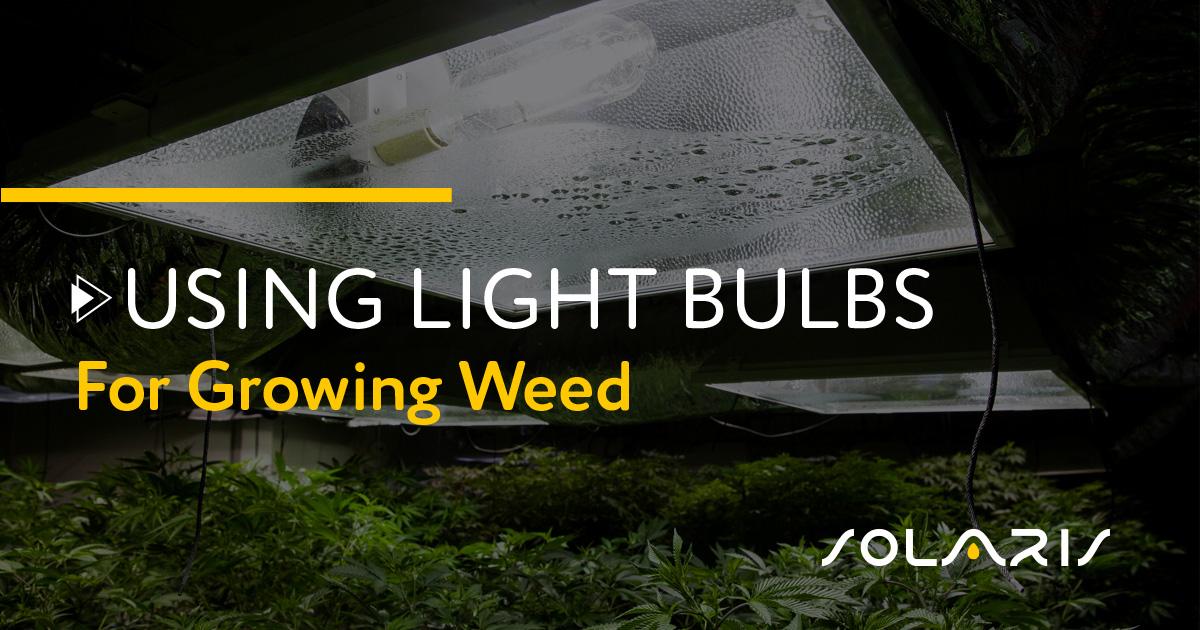 Using Light Bulbs for Growing Weed